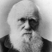 Darwinist