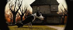 Dog (Monster House)