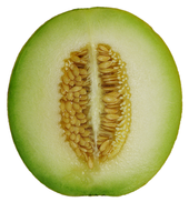 Cantaloupe Melon cross section