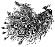 Peacockrip