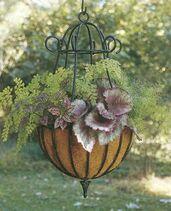 Peacock-hanging-baskets