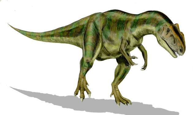 File:Allosaurus BW.jpg
