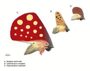 Tupandactylus heads