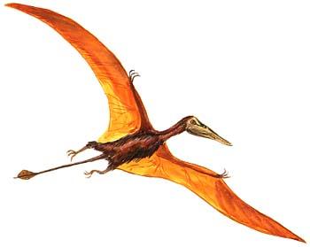 Rhamphorhynchus