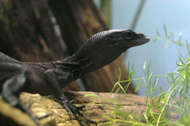 File:BlackTreeMonitor.jpg