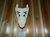 Dwarf crocodile skull 2