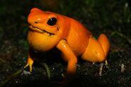 Orange terribilis 2