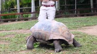 Tortoise Australia Zoo