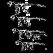 Hypothetical Deinonychus size range