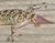 Geckostub
