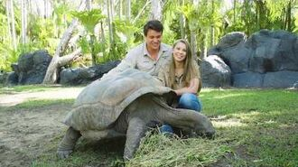 Adopt an Animal at Australia Zoo - Igloo the Tortoise
