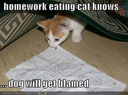 File:Funny pictures homework eating cat Funny cats and dogs pics-s438x324-49243-580.jpg