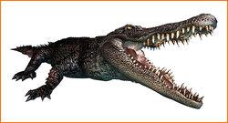 Alligator ene
