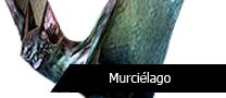 PTMurcielago