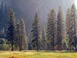 RaccoonForest