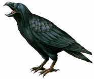 RE Crow artwork