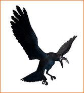 Crow ene
