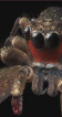 Maneater file icon