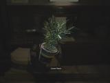 Green Herb (RE2 remake)