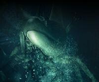 Sea Creeper