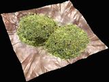 Mixed Herb (G+G)