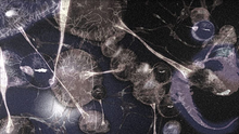 Virus Fusion 3