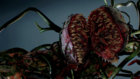 Ivy Infected of Resident Evil 2 Remake Explored T Virus Plant Contagion Explained Plant 43 42 11-32 screenshot