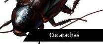 PTCucarachas