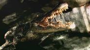 Alligatorewii