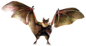 UC Infected Bat