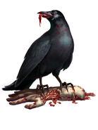 Enemies crow