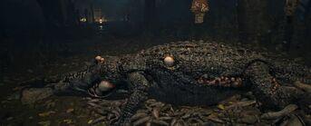 AlligatorEoZ