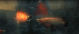 Arowanas being infected with t-Abyss