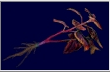 File:Red herb (RE3).png