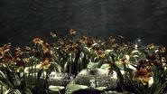 Garden of the Sun examine 1