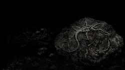 Re4 fossil plaga