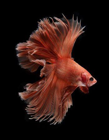Fish-5s