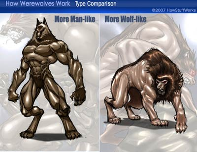 Werewolf-comparison