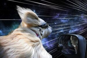 Warpdogs5
