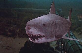 Jaws-3-d-shark