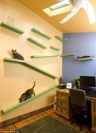 Kitty-Paradise-Office