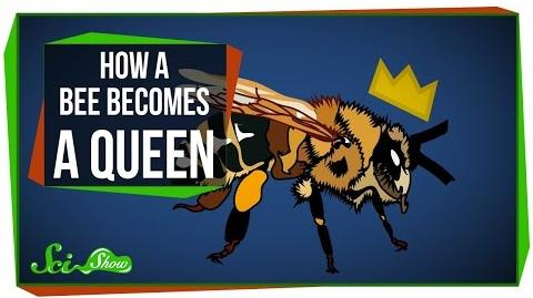 How a Bee Becomes Queen
