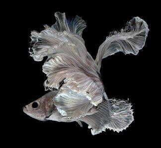 Fish-1s0