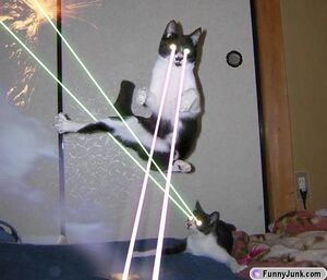 Laser kitties
