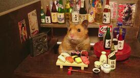 Hamster-Sushi-and-Saki-Bar-750x421