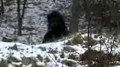 DISTURBING BIGFOOT FOOTAGE