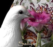 Hilaire9 pets Sally