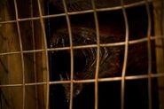 Riddick 3 Beast