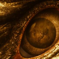 Closeup of the eye