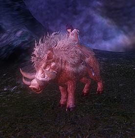 Feral Boar - mount